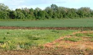 Sửa đổi Luật Đất đai: Phải bám sát thực tiễn đời sống