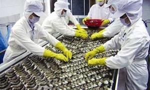 Vì sao Trung Quốc cấm nhập khẩu tôm tươi Việt Nam?