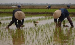 Nông nghiệp đối phó khủng hoảng tài chính