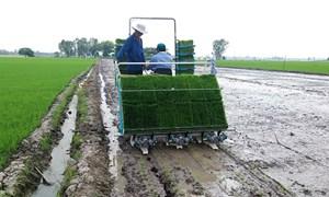 Quỹ hỗ trợ nông dân giúp nhiều nông dân phát triển kinh tế