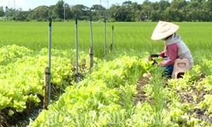 Nông sản gặp khó trong tiêu thụ do dịch Covid-19