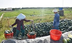Tổ chức thu hoạch và tiêu thụ nông sản trong tình hình dịch Covid-19