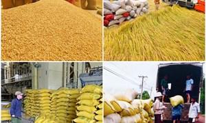 Bảo đảm vốn tín dụng phục vụ thu mua, tạm trữ thóc, gạo
