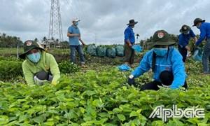 Giải bài toán sản xuất và tiêu thụ nông sản trong thời gian giãn cách xã hội