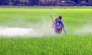 Khôi phục sản xuất nông nghiệp: Nhiều thách thức và sự quyết tâm