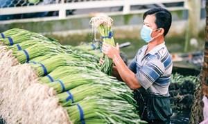 Nhiều kênh hỗ trợ hợp tác xã tiêu thụ nông sản