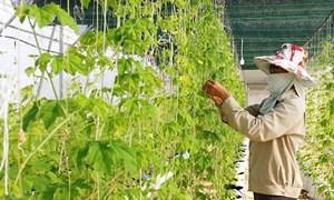 Đầu ra bền vững cho mô hình nông nghiệp công nghệ cao