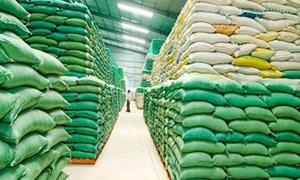 2.924 tỉ đồng cho vay thu mua, tiêu thụ lúa gạo