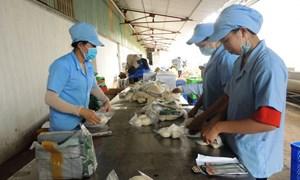 Đồng bằng sông Cửu Long tái khởi động sản xuất kinh doanh bền vững