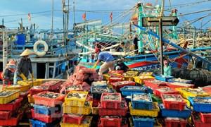 Khắc phục tình trạng khai thác thủy sản bất hợp pháp tỉnh Bình Định