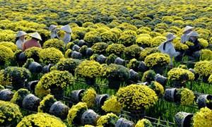 Thúc đẩy xuất khẩu rau quả Việt Nam sang thị trường Liên minh châu Âu