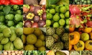 Sản phẩm trái cây: Đừng để nông dân tự bơi
