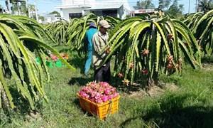 Liên kết sản xuất nâng cao chất lượng nông sản