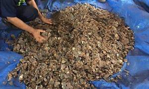 Hải quan TP. Hồ Chí Minh bắt giữ tiếp 3,3 tấn vảy tê tê