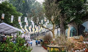 [Video] Cây hoàng mai rừng 120 năm tuổi, giá 4 tỷ đồng tại chợ Tết phố cổ