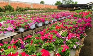 Những chợ hoa nổi tiếng Hà thành dịp Tết Nguyên đán 2019