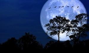 [Video] Chiêm ngưỡng siêu trăng đầu tiên của năm 2020 từ nước Mỹ