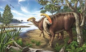 [Video] Phát hiện ADN trong hóa thạch khủng long 75 triệu năm
