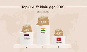 [Infographics] Việt Nam xuất khẩu gạo thế nào