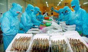 Khẳng định sự minh bạch của doanh nghiệp xuất khẩu Việt Nam