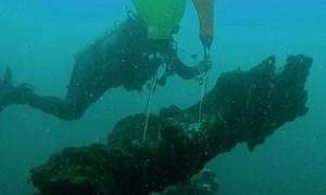 [Video] Khu rừng cổ đại 60.000 năm được phát hiện dưới đáy đại dương