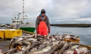 EU áp dụng công cụ mới chống đánh bắt hải sản trái phép