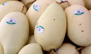 Trung Quốc đứng đầu về thị trường nhập khẩu rau quả của Việt Nam