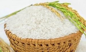 Giá lúa gạo ngày 24/5: Giá gạo nguyên liệu giảm 100 đồng/kg