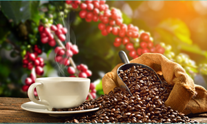 Giá cà phê ngày 24/5: Lấy lại đà phục hồi