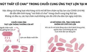 """[Infographics] """"Nút thắt cổ chai"""" trong chuỗi cung ứng thịt lợn tại Mỹ"""
