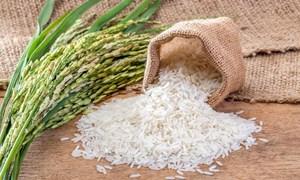 Giá lúa gạo ngày 28/5: Giá gạo xuất khẩu bất ngờ giảm 5 USD/tấn