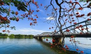 [Video] Vẻ đẹp của cây cầu biểu tượng xứ Huế