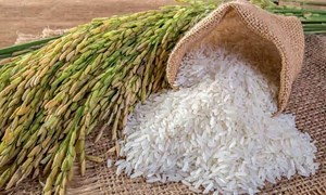 Giá lúa gạo ngày 29/5: Duy trì ổn định