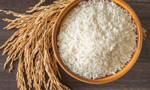 Giá lúa gạo ngày 6/6: Xu hướng giảm mạnh