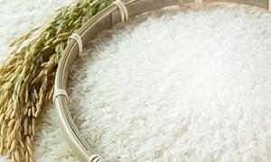 Cuối tuần, giá gạo nguyên liệu xu hướng giảm