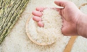 Ngày 22/6, giá gạo nguyên liệu tăng nhẹ