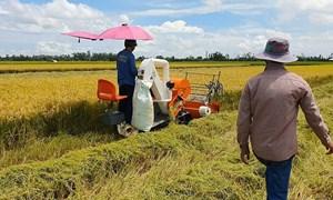 Ngày 24/6, giá lúa gạo duy trì ổn định