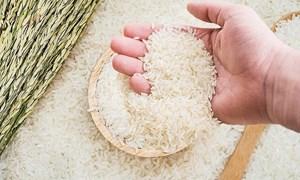 Giá lúa gạo ngày 27/6: Giá lúa gạo đi ngang