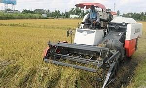 Giá lúa gạo hôm nay 30/6: Áp lực cạnh tranh lớn, giá gạo xuất khẩu giảm thêm 5 USD/tấn