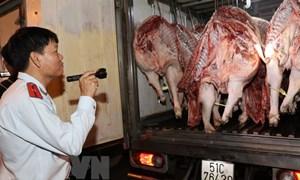 TP. Hồ Chí Minh phát hiện thêm ổ dịch tả lợn châu Phi