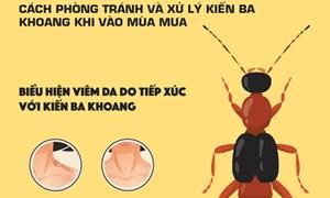 [Infographics] Mẹo phòng tránh và xử trí kiến ba khoang khi vào mùa mưa