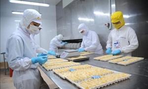 Nhiều cơ hội cho doanh nghiệp Việt Nam tiếp cận thị trường châu Âu