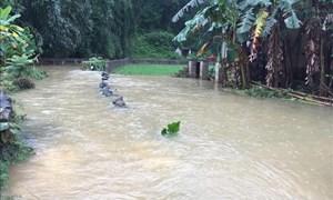 [Video] Mưa lớn gây ngập hơn 900 ngôi nhà tại Cao Bằng