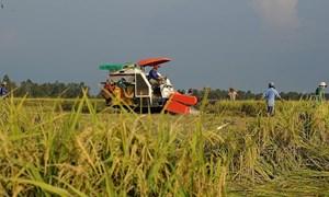 Giá lúa gạo hôm nay 16/7: Giá nếp vỏ tươi giảm mạnh 600 đồng