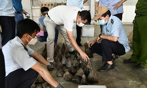 Hải quan Đà Nẵng phát hiện bắt giữ hơn 138kg sừng động vật nghi là sừng tê giác