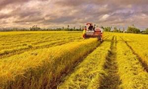 Giá lúa gạo hôm nay 20/7: Giá lúa tăng giảm trái chiều