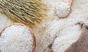 Giá lúa gạo hôm nay 23/7: Giá lúa Đài thơm 8 tăng