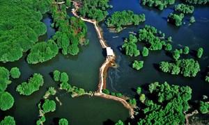[Infographics] Khu dự trữ sinh quyển rừng ngập mặn Cần Giờ