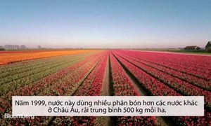 [Video] Lý do Hà Lan nhỏ bé nhưng xuất khẩu nông sản thứ hai thế giới