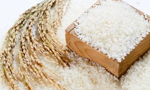 Giá lúa gạo hôm nay 3/8: Giá lúa tăng giảm trái chiều